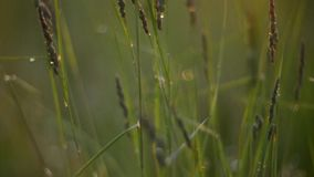 Grass and sun stock video footage
