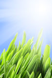 Grass and sunbeam Royalty Free Stock Photos