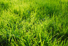 Grass in a sunlight Stock Images