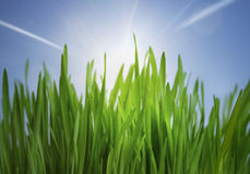 Grass and sunlight Royalty Free Stock Photos