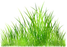 Grass in sunlight Royalty Free Stock Photography