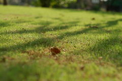 Grass and sunlight Stock Photography