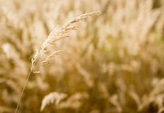 Grass in sunlight. Grass in a sunlight in the afternoon Stock Image