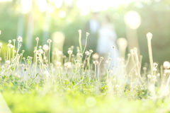 Grass. With sunlight in afternoon time Royalty Free Stock Images