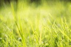 Grass in a sunlight Stock Image