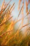 Grass in sunlight Royalty Free Stock Photo
