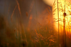 Grass in sunlight Royalty Free Stock Image