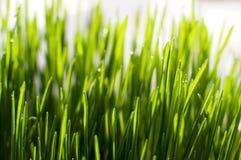 Grass in sunlight Stock Photos