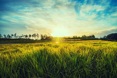 Grass and sunlight Royalty Free Stock Photo
