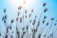 Grass and sunny. On blue sky Stock Photos