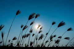 Grass and sunny. On blue sky Stock Photography