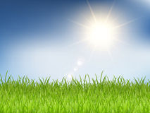 Grass and sunny blue sky Royalty Free Stock Images