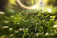 Grass in sunny day Stock Images