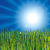 Grass and sunny sky Royalty Free Stock Photo