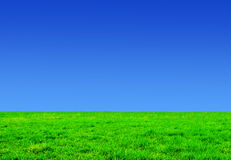 Grass and sunny sky Stock Photography