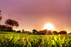Grass sunrise. Grass filled with dew on a sunrise morning stock image
