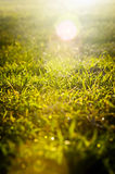 Grass Sunrise Stock Photography