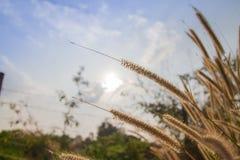 Grass. With sunrise orange sky Stock Photo
