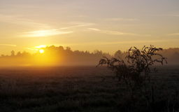Grass. Sunrise over meadow in autumn Royalty Free Stock Photography