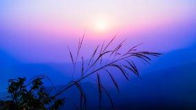 Grass sunrise Stock Photos
