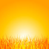 Grass at sunset. Vector illustration of grass at sunset Royalty Free Stock Photos