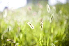 Grass in a sunset Stock Photography