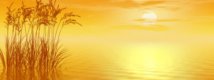 Grass Sunset. Water plants at sunset -  3D scene Stock Image