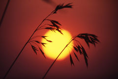 Grass in sunset Stock Photography