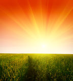 Grass and sunset Royalty Free Stock Images