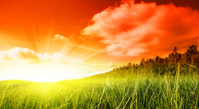 Grass and sunset Stock Images