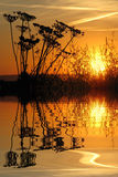 Grass in the sunset above water with reflection Royalty Free Stock Images