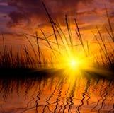 Grass on sunset background Stock Photo