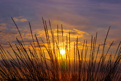 Grass on sunset  background Royalty Free Stock Photos