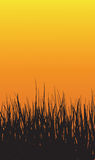 Grass Sunset Background. Vector Illustration Of Grass Sunset Background Stock Image