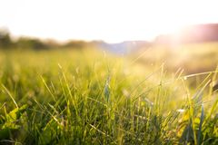 Grass in sunset Stock Photo