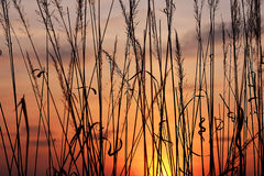 Grass at sunset Royalty Free Stock Image
