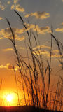 Grass Sunset Stock Images