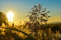 Grass in sunset, Portugal. A beautiful Sunset over the Sorraia river in Samora Correia, Portugal Stock Photography