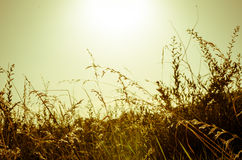 Grass at sunset Stock Photography