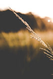 Grass when sunset Stock Images