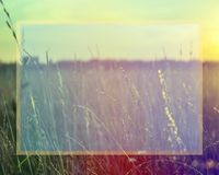 Grass when sunset with retro vintage filter with place for text stock photography