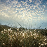 Grass and sunset sky Stock Photography
