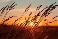 Grass at sunset Stock Photos