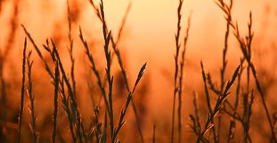 Grass and sunset, summer time stock photography