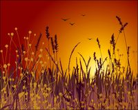 Grass and sunset vector royalty free illustration