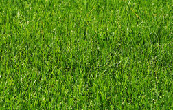 Grass in the sunshine. Fresh grass in the sun light,green grass Royalty Free Stock Images