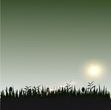 Grass with sunshine silhouette. Grass and flowers with sunshine silhouette Stock Image