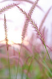Grass sway Stock Images