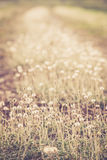 Grass swaying Royalty Free Stock Photos