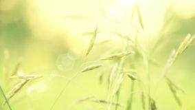 Grass Swaying in the Wind Stock Image